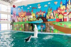 Un discours des entraîneurs avec des dauphins dans un dolphinarium Images libres de droits