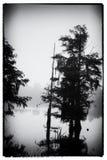 Un diseño del vintage de un árbol de ciprés en la isla Luisiana de Guste Foto de archivo libre de regalías