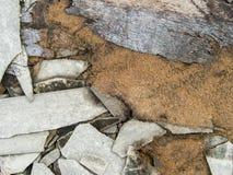 Un disordine abbandonato decomposto della costruzione del cemento con le mattonelle di tetto e corteggia Fotografia Stock