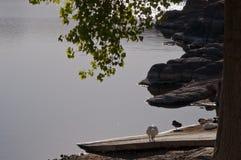 Un dock menant dans un lac pendant le matin Photographie stock libre de droits