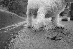 Un dog& x27; prospettiva di s Fotografia Stock Libera da Diritti