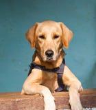 Un doggy dell'animale domestico immagini stock