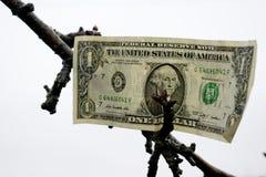 Un dollar américain sur l'arbre images stock