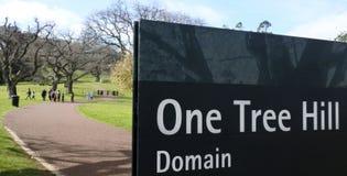 Un dominio della collina dell'albero nel parco di Cornovaglia a Auckland Nuova Zelanda Fotografia Stock