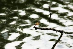 Un dragon dans l'étang Images libres de droits