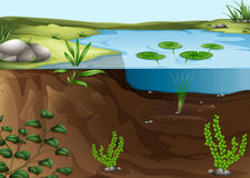 Un ecosistema de la charca ilustración del vector