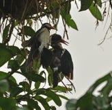 Un effort mort de poussin et de délivrance par l'oiseau de maman photos libres de droits