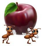 Hormigas que llevan una manzana grande Imagen de archivo
