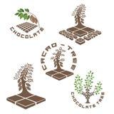 un ejemplo que consiste en cinco imágenes de un árbol de chocolate Imágenes de archivo libres de regalías