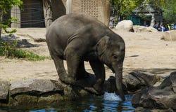 Un elefante Imagenes de archivo