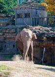 Un elefante immagini stock