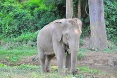 Un elefante Immagini Stock Libere da Diritti
