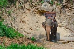 Un elefante asiatico con come va per trekking immagine stock