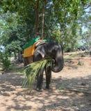 Un elefante con un asiento para los turistas está comiendo Imagen de archivo libre de regalías