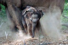 Un elefante del bambino Fotografia Stock