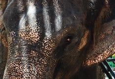 Un elefante della siluetta su un tramonto della priorità bassa Fotografia Stock Libera da Diritti