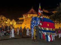Un elefante di ceremonial sfoggia dopo il tempio della reliquia sacra del dente a Kandy, Sri Lanka durante il Esala Perahera immagini stock