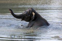 Un elefante disfruta de un baño en un agujero de agua en el parque nacional de Yala cerca de Tissamaharama en Sri Lanka imagen de archivo