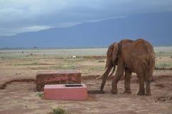 Un elefante, Kenia Foto de archivo
