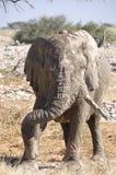 Un elefante mudy tiene un mejor cuidado de piel imagenes de archivo