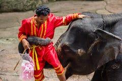 Un elefante porta l'istruttore Immagini Stock Libere da Diritti