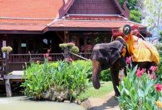 Un elefante sta mangiando l'acqua Immagini Stock