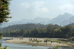 Un elefante supera il fiume Fotografia Stock
