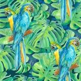 Un elemento senza cuciture del modello di due pappagalli dell'ara e illustrazione vettoriale