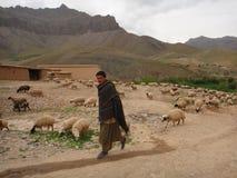 Un encargado de las ovejas Foto de archivo libre de regalías