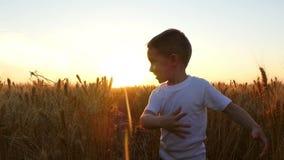 Un enfant avec la joie et joie touche des épillets de blé dans un domaine contre le contexte d'un coucher du soleil banque de vidéos