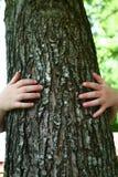 Un enfant et un arbre Photographie stock libre de droits