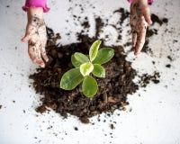 Un enfant plantant un arbre Image stock