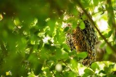 Un enjambre de abejas fotografía de archivo