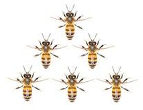 Un enjambre de abejas en un fondo blanco Foto de archivo libre de regalías