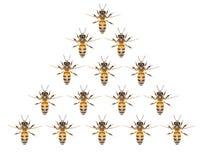 Un enjambre de abejas en un fondo blanco Foto de archivo