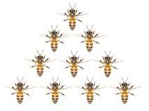 Un enjambre de abejas en un fondo blanco Imagen de archivo