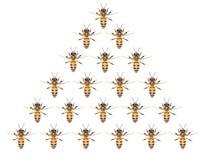 Un enjambre de abejas en un fondo blanco Fotos de archivo