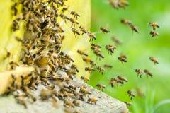 Un enjambre de abejas en la entrada de la colmena en colmenar Imágenes de archivo libres de regalías