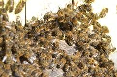Un enjambre de abejas en la entrada de la colmena en colmenar Imagen de archivo libre de regalías