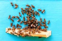 Un enjambre de la abeja Fotos de archivo