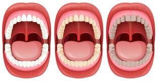 Un ensemble d'anatomie humaine de bouche illustration libre de droits