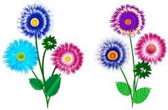 Un ensemble d'aster de bouquets avec des bourgeons Photographie stock