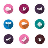 Un ensemble d'icônes colorées a isolé des insectes pour le votre illustration libre de droits