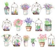 Un ensemble d'illustrations avec des bouquets d'aquarelle des wildflowers dans un pot rustique et des pots et de florariums avec  Image libre de droits