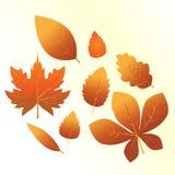 Un ensemble de feuilles oranges illustration stock
