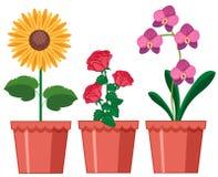 Un ensemble de fleur dans le pot illustration de vecteur
