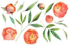 Un ensemble de fleurs d'aquarelle photo libre de droits
