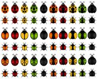 Un ensemble de graphismes d'insecte de vecteur : coccinelle Photo stock