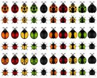 Un ensemble de graphismes d'insecte de vecteur : coccinelle Photo stock