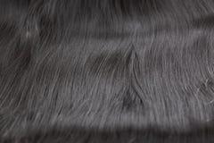 Un ensemble de prolongements de cheveux noirs des cheveux bouclés de brune rougeâtre sur une table de boutique de beauté image libre de droits